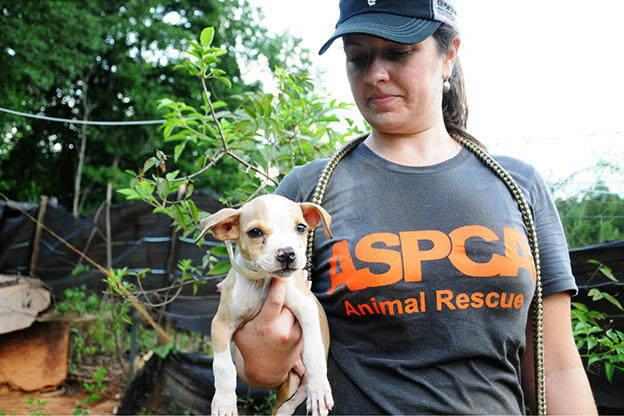 dog-fighting-aspca-19-625x450